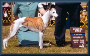 Lily, Major Win, 2002 Nisqually Kennel Club, Lacey